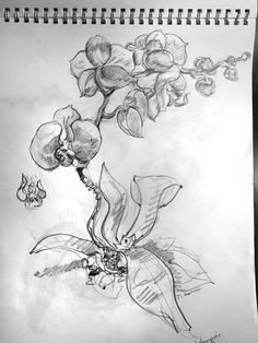 Prep drawings for virtual reality painting for New York Botanical Garden. Orchids