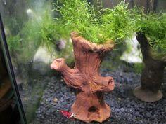 Angebot - Garnelenbaum- Dekoration - Aquarium - Ton - Handarbeit