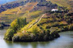 Tedo River vineyards, Portugal