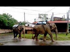 Jungle Safari in Nepal - $21 Chitwan Jungle Safari  - Chitwan Tour Packa...