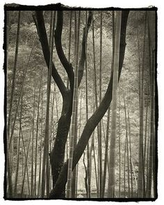 Trees Portraits of Gods. The photography of Nobuyuki Kobayashi
