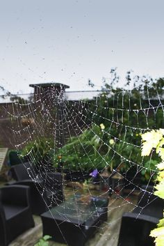 Beautiful spiderwebs on a rooftop.