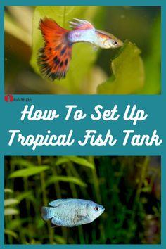 Tropical Freshwater Fish, Tropical Fish Tanks, Tropical Aquarium, Freshwater Aquarium, Tall Plants, Live Plants, Aquarium Gravel, Home Aquarium, Aquarium Filter