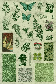 Forest Lichen Mushrooms Trees Leaves Fern Queen Anne's Lace rubber stamps