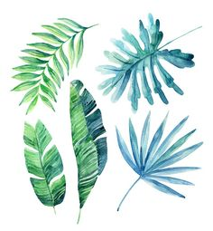 watercolor-tropical-leaves-set-illustration-id540723318 (399×432)