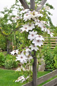 Garden Cottage, Home And Garden, Pergola Patio, Backyard, Cerca Natural, Dream Garden, Garden Projects, Gardening Tips, Planting Flowers