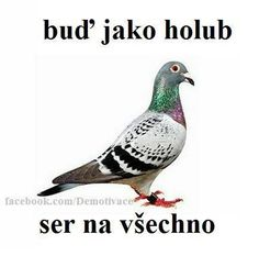 buď jako holub - ser na všechno