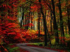 Colorful Way Lámina fotográfica
