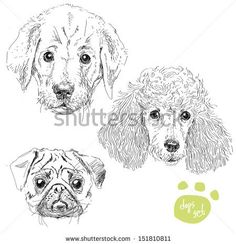 poodle sketches - Google Search