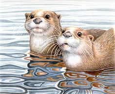 """Janet Matthews 