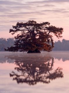 Reflecting Grace by David Chauvin, via 500px ~ The untidy grace of an ancient bald cypress reflected in the pre-dawn light. Louisiana