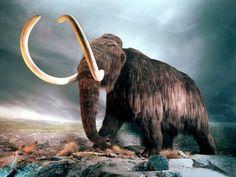 Utilizando técnicas de edición genética científicos prometen revivir a un mamut