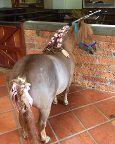 Princesita de San Samuel lista para ser Pajecita 🎎🎉🎊💍💍💍💍💍🔝🔝🔝🔝🔝#ponies #ponys #pony #criaderosansamuel #caballosminiatura #caballito #minihorse #minihorses #minihorsesofinstagram #minihorses