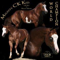 Our stallion we raised Mighty CK Kid.