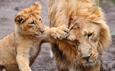 Lion Sanctuaries in India  @ sanctuariesindia.com