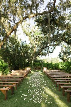 Oyster Bays Ceremony Site is beautiful all year round, the shaded area keeps it nice and cool on those sunny fall days! Ceremony Seating, Outdoor Wedding Reception, Wedding Ceremony Decorations, Outside Wedding, Wedding In The Woods, Wedding Seating, Forest Wedding, Outdoor Ceremony, Wedding Ceremonies