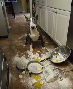 insolite betise chien cuisine