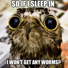 Sad baby Potoo…OMG!! That's too cute!! My step dad used to say things like that all the time.