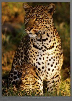 <3 #wild #animals