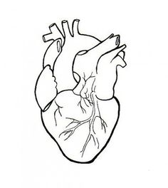Human Heart Embroidery Anatomical Line Art Simple Embroidery Pattern PDF Heart Drawings, Simple Art Drawings, Drawing Ideas, Brain Drawing, Human Heart Drawing, Anatomical Heart Drawing, Heart Anatomy Drawing, Simple Embroidery Designs, Geometric Embroidery
