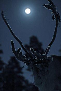 Reindeer tree in Moonlight. No it is a real reindeer. Sun Moon, Stars And Moon, Moon Shine, Beautiful Moon, Beautiful Images, Beautiful Creatures, Animals Beautiful, Moon Shadow, Farm Photo
