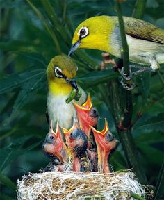 Happy family of japanese white-eyes