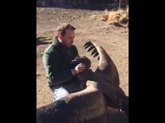 Large Condor Regularly visits Man who saved it's life as a Baby. - YouTube
