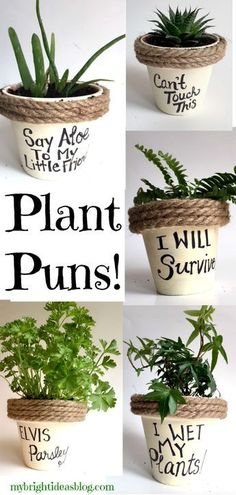 Puns on Painted Potted Flower Pots - Adorable Gift Idea to Make Them Smile Easy Gift Idea! Paint flower pots, add rope and a silly pun. Even kids could make this! Paint flower pots, add rope and a silly pun. Even kids could make this! Painted Flower Pots, Painted Pots, Decorated Flower Pots, Diy Garden, Garden Landscaping, Garden Puns, Garden Gifts, Kids Garden Crafts, Landscaping Ideas