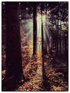 The sunlight through trees