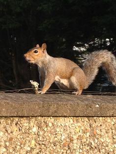 Squirrel Squirrel, Kangaroo, Animals, Baby Bjorn, Animales, Animaux, Squirrels, Animal, Animais