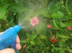How to Make a Baking Soda Garden Spray #stepbystep