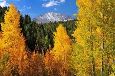 Take the trip up Pikes Peak Highway for a breath of fresh mountain air and breathtaking golden hues.