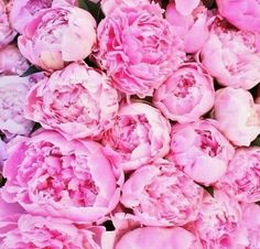Love this color of pink peonies