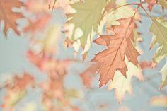 #autumndreamery - Autumnal Leaves