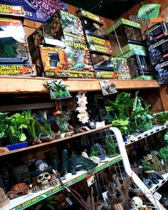 We have everything you need to make your reptile happy! Don't hesitate to check the variety online! And don't forget that you can add items to your wish list by clicking on the heart on the page! ❤ (Then all you have to do is share your wish list with your friends & fam 😉😅💕) #MagazooReptiles Reptile Accessories, Reptiles, Don't Forget, Aquarium, Friends, Heart, Check, Happy, Boutique Online Shopping
