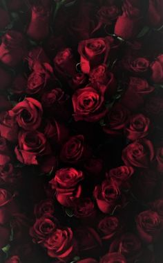 Ideas Wall Paper Iphone Flowers Red For 2019 Flowers Wallpaper, Red Wallpaper, Wallpaper Backgrounds, Red And Black Wallpaper, Iphone Wallpapers, Cute Wallpapers, Dark Flowers, Pretty Flowers, Red Roses Background