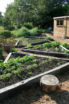 Raised beds by Fluffymuppet, via Flickr