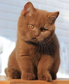 Do you think I'm a handsome cat? - your daily dose of funny cats - cute kittens - pet memes - pets in clothes - kitty breeds - sweet animal pictures - perfect photos for cat moms Cute Baby Cats, Cute Cats And Kittens, Cute Little Animals, Cute Funny Animals, Kittens Cutest, Funny Cats, Ragdoll Kittens, Tabby Cats, Bengal Cats