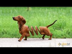 Throughout history, many famous and notable people have owned a Dachshund and this includes some of the Presidents of the United States. I Love Dogs, Cute Dogs, Photo Manipulation Tutorial, Dachshund Funny, Daschund, Photoshop Tutorial, Adobe Photoshop, Lightroom, Working Dogs