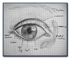 "Posted as ""How to draw eyes"". This is sad because it is a bad example of an eye. I can see 5 major mistakes immediately, so let us discuss in class what is so immensely wrong about it, if you do not already have learned it. Drawing Lessons, Drawing Techniques, Drawing Tips, Drawing Sketches, Painting & Drawing, Art Drawings, Sketching, Draw Eyes, Eye Art"