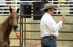Judge Denies Haws' Motion to Dismiss in Case of 10 Dead Horses | Rate My Horse PRO