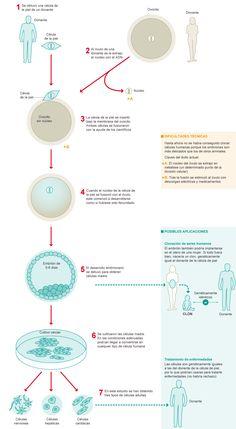 Clonación de células humanas