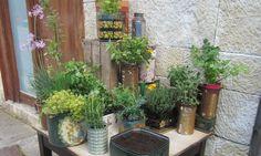 En esta ocasión veremos cómo plantar plantas aromáticas en latas y así, además de disfrutar de estas plantas culinarias, también decoraremos de una manera original.  Más info: http://www.hogarutil.com/jardineria/tecnicas/arte-floral/201405/plantas-aromaticas-latas-24667.html#ixzz30pmpkBTk