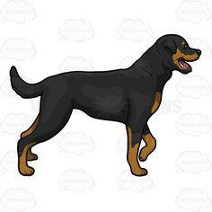 Big Black Dog Looking Alert