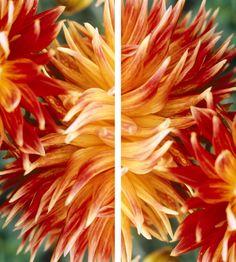"""Golden Flute Love""  by tela-design: 2 pieces, free dimensions, free materials such as canvas stretched on a frame, wallpaper, film, glass, metal, ceramic etc. 10 more combinations  under   http://www.tela-design.com/en/design/tela_100.html   ""Golden Flute Love""  von tela-design: 2-teilig, freie Grössen, viele Materialien, wie z.B. Leinwand auf Keilrahmen, Tapete, Folie, Glas, Metall, Keramik, HPL etc. 10 weitere Kombinationen unter    http://www.tela-design.com/design/tela_100.html"