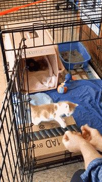 cute little kitty jump     crazy cats  more cute & funny gifs  crazy $hit & fails  more Amazing gifs, go here