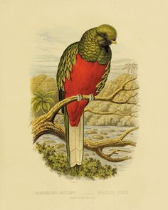This gorgeous illustration is from a series of hand colored lithographs. It comes from the Belgium book published in the 1800's.  This print is