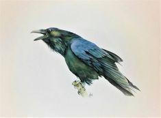 The raven crow  original watercolor painting black ghotic