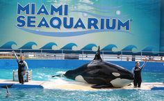 USDA Gets Sued in Latest Effort to Free Lolita the Lonely Orca