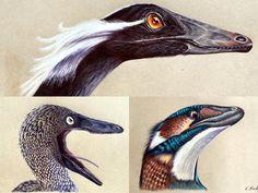 Troodontidae by Polihierax on DeviantArt